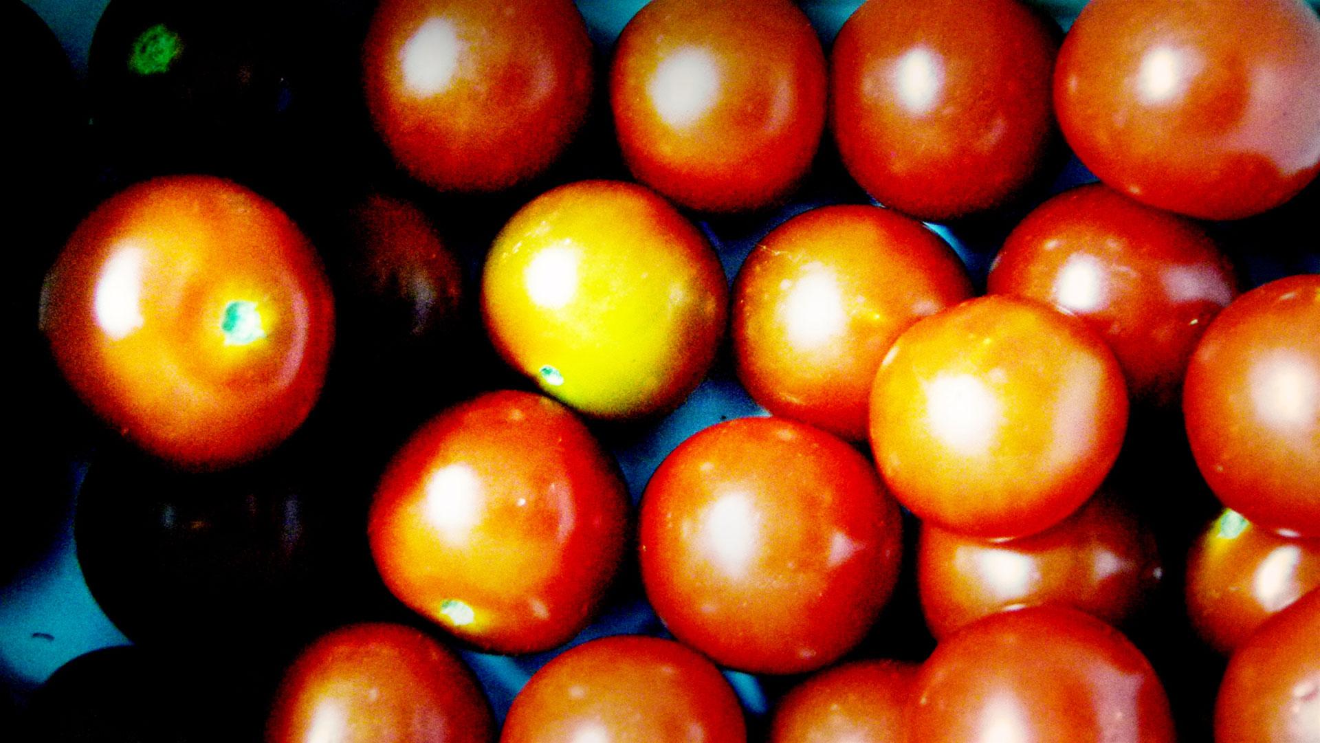 16_Tomaten_2